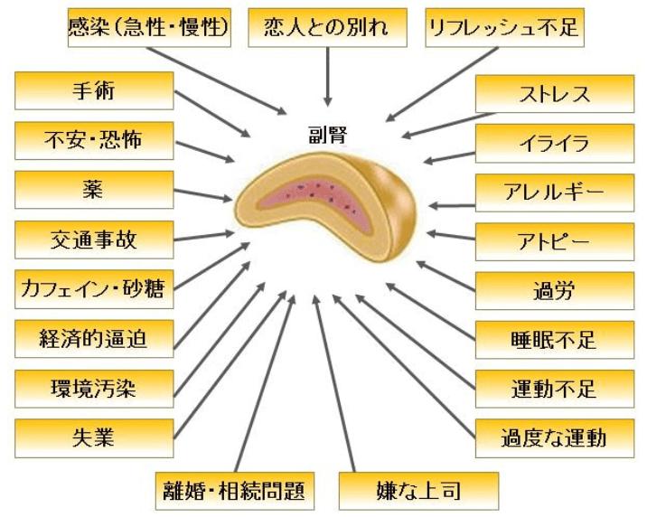 【副腎疲労】の検査