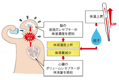 【水・体液】が不足すると脱水や健康障害が起こります